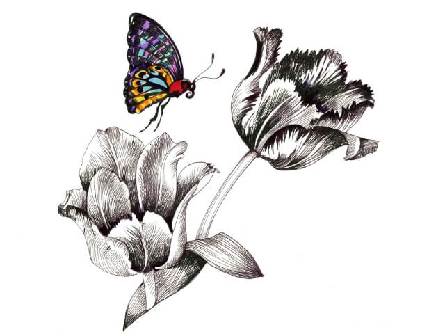 Colored Butterfly with two black & white tulips